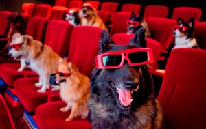 dogs watching a movie in the theater